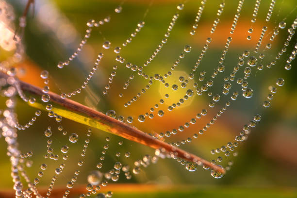 sparkling dew on spider web and autumn leaf with colorful bokeh stock photo
