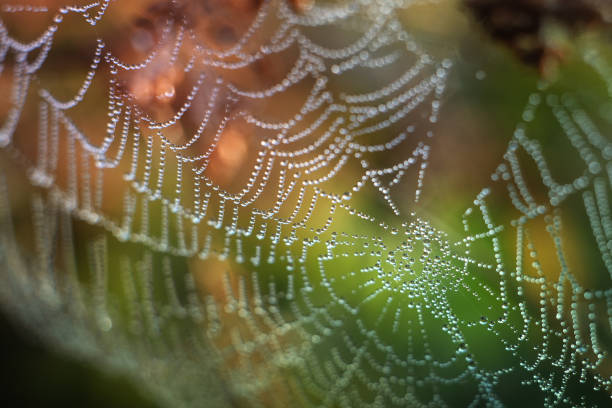 sparkling dew on spider web with colorful autumn background stock photo