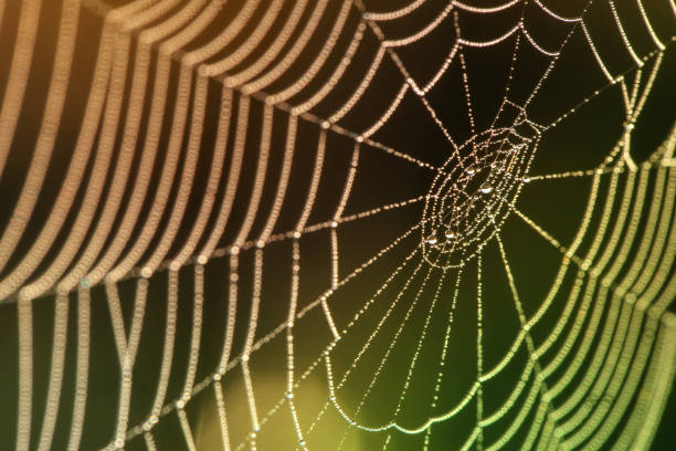 sparkling drops of water on spider web with colorful bokeh stock photo