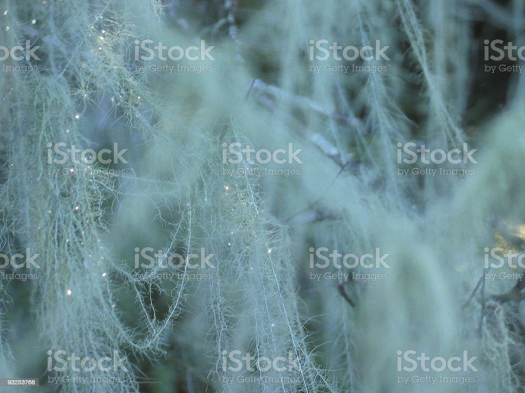 Sparkling Moss stock photo