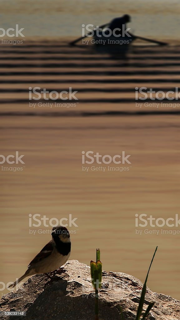 Sparrow and Fisherman royalty-free stock photo