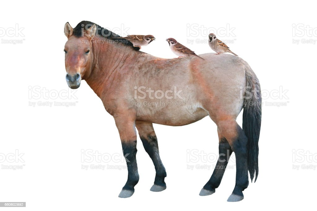 sparrow and horse royalty-free stock photo