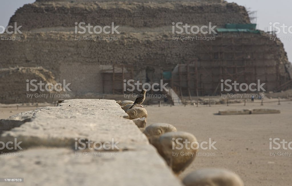 Sparrow close to Saqqara complex royalty-free stock photo