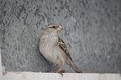 istock Sparrow eyes 1193081415