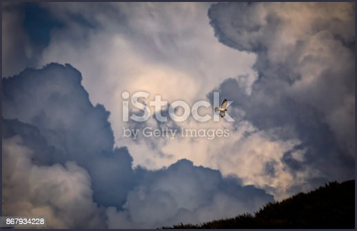 istock Sparrow hawk against storm clouds 867934228