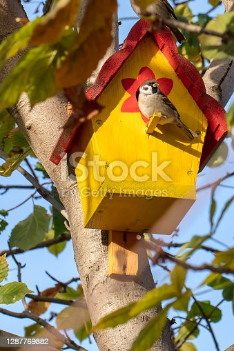 istock Sparrow in a bright yellow birdhouse 1287769882