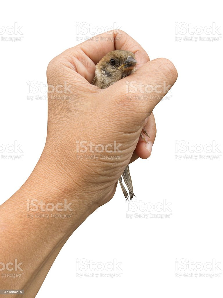 Sparrow In Woman Hand royalty-free stock photo