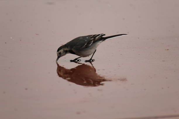 Sparrow looking for food on rainy day picture id1214251022?b=1&k=6&m=1214251022&s=612x612&w=0&h=cbuk7shqxnoiyfciz ewgtom8xj8eng4lo kzrgg ko=