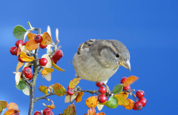 Sparrow on a twig. stock photo