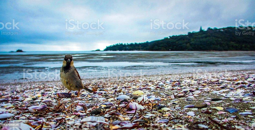 Sparrow on beach stock photo