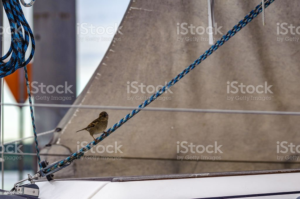 Spatz an Bord stock photo