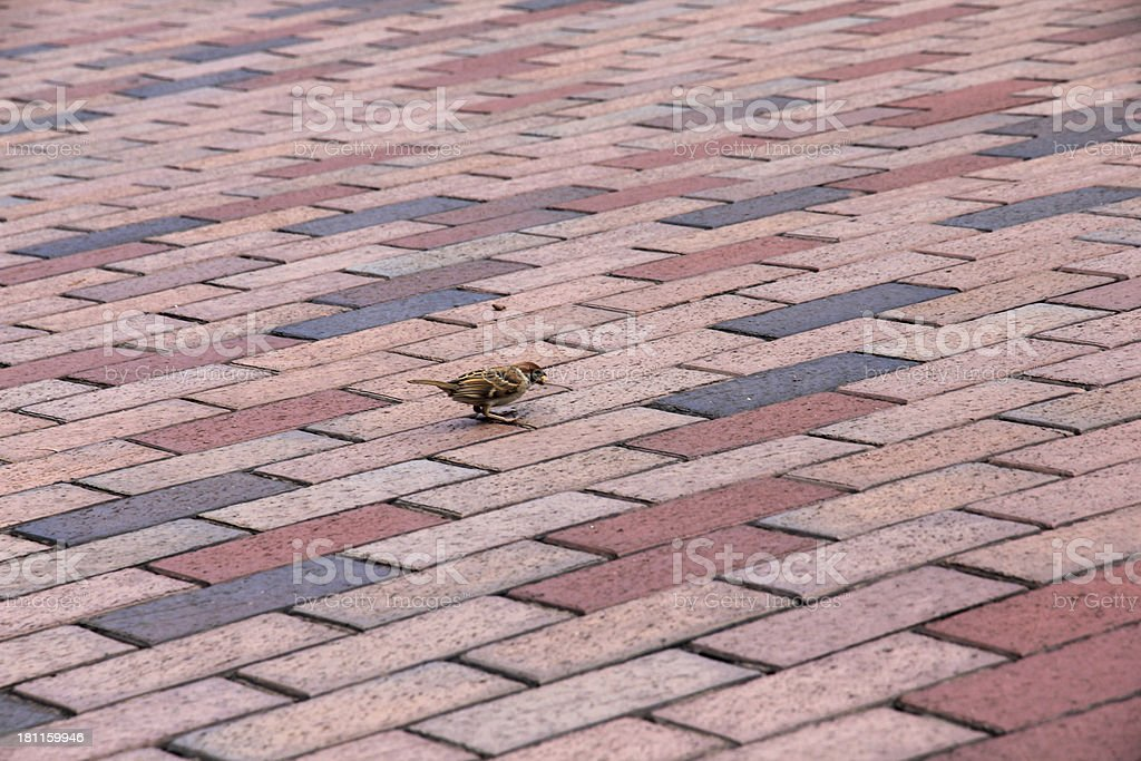 Sparrow On Brick Paver Pattern Stock Photo Download Image Now