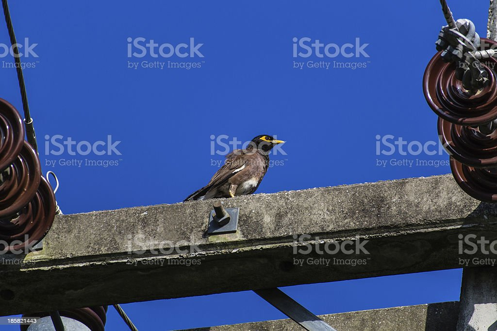 Sparrow on Electricity post royalty-free stock photo