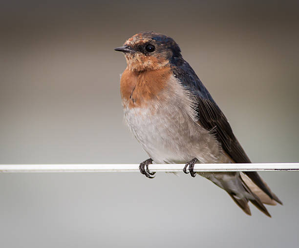 Sparrow on wire fence stock photo