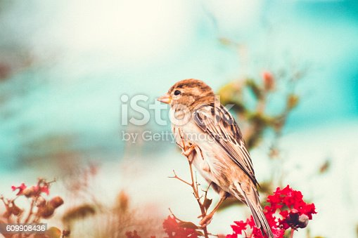 Sparrow perched In A Colourful Fall Myrtle Shrub.  Shot jn Washington D.C.