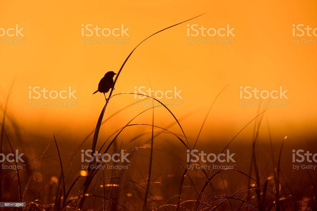 Sparrow Silhouette stock photo