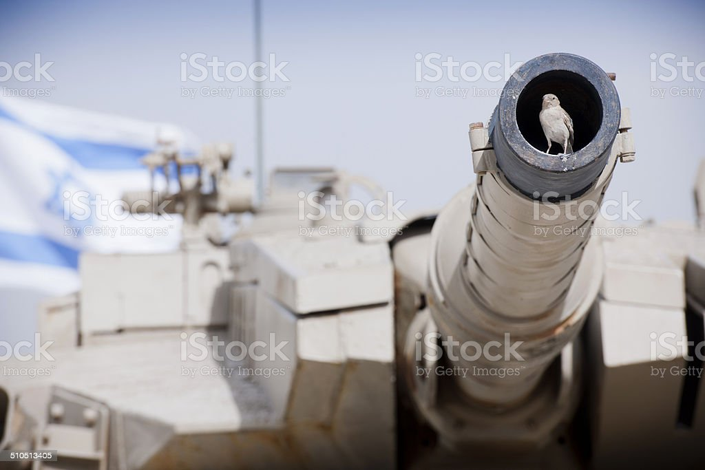 Sparrow sitting in canon stock photo