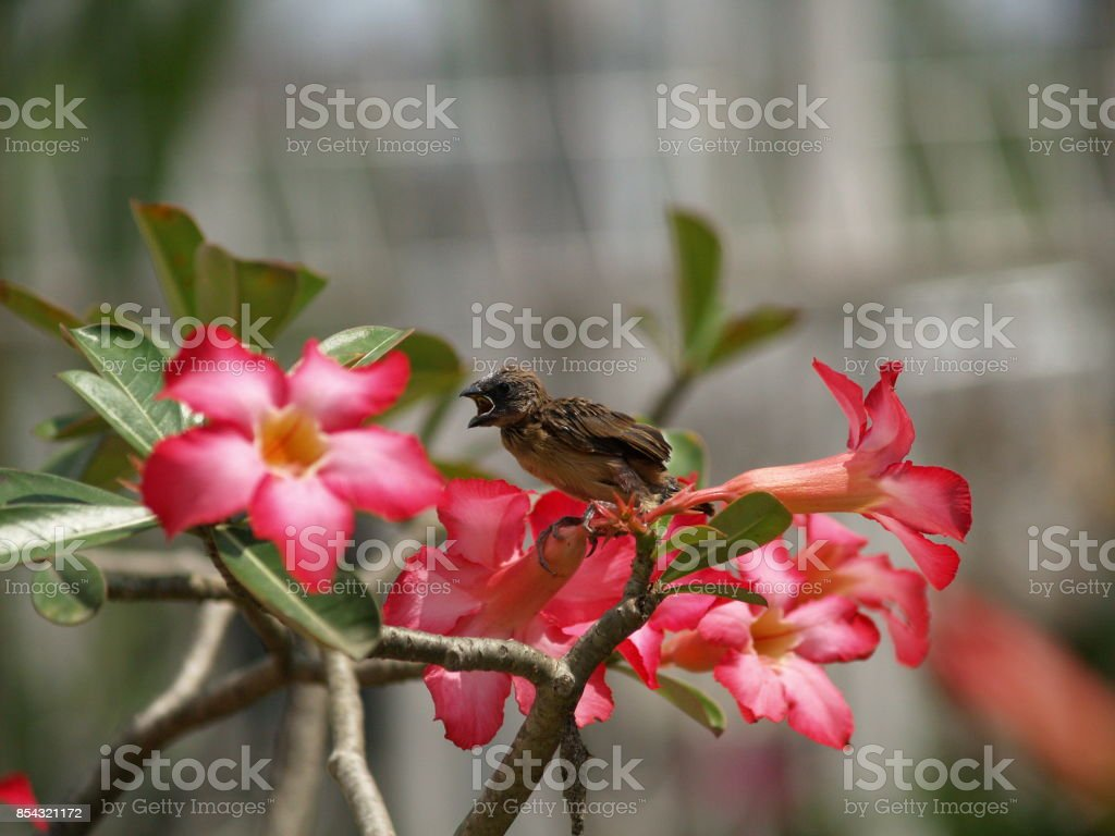 Sparrow sitting on a branch stock photo