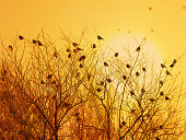 Sparrows in the setting sun