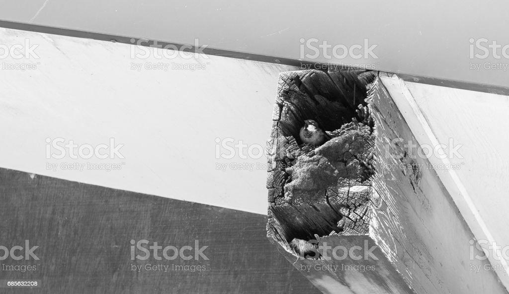 麻雀的巢 免版稅 stock photo