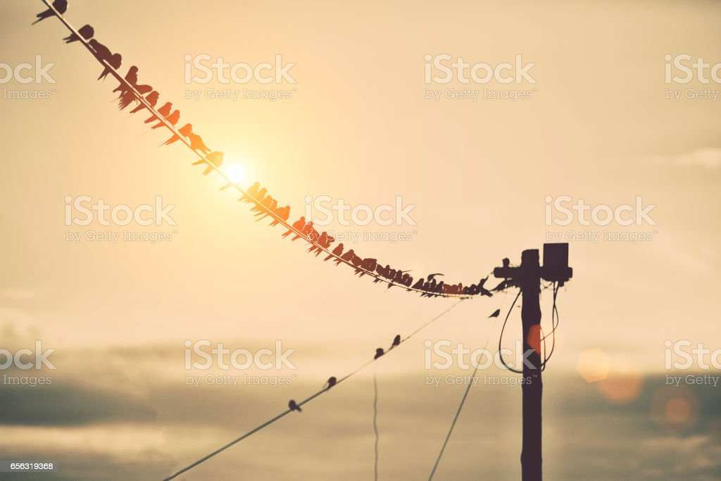 Sparrows on a telephone line stock photo