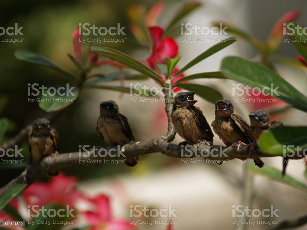 Sparrows sitting on a branch stock photo