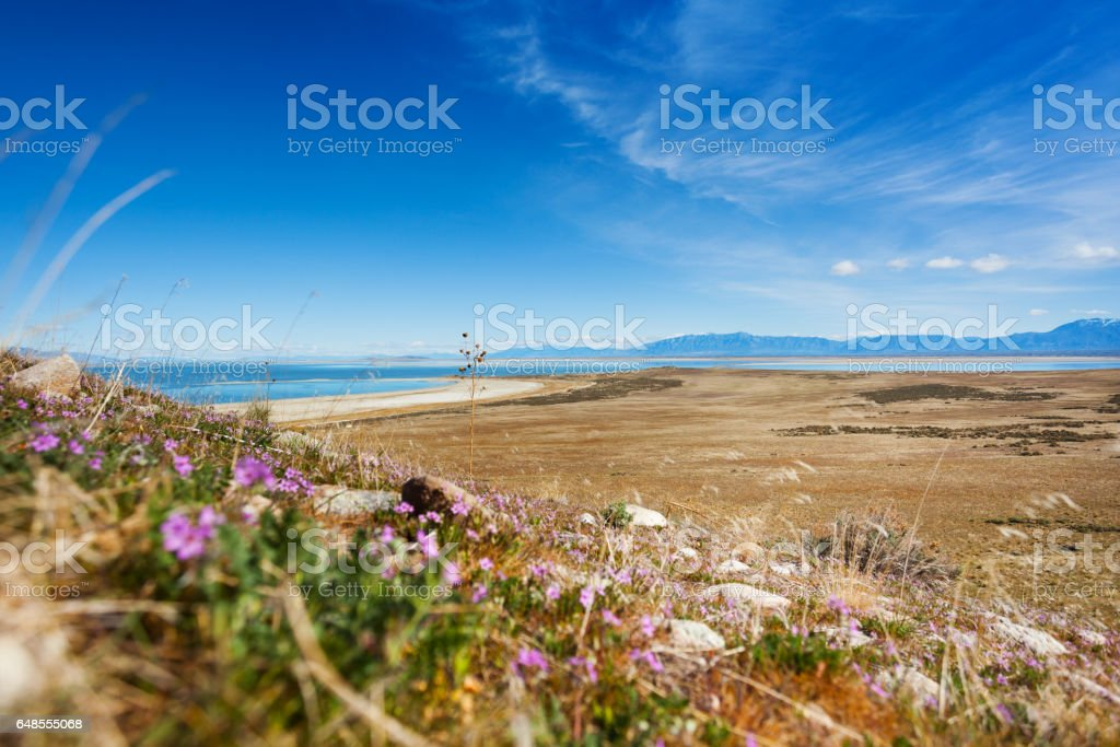Sparse vegetation on lakeside of Great Salt Lake stock photo