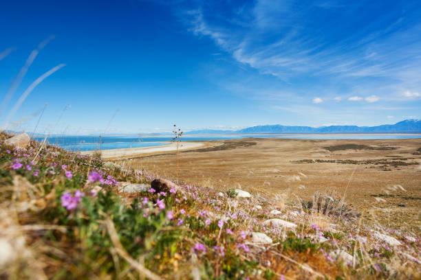 Sparse vegetation on lakeside of Great Salt Lake stock photo