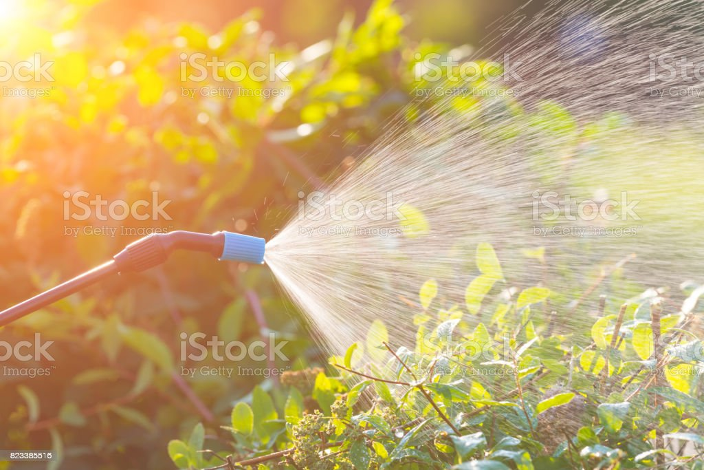 Spaying flowers with water or pesticides stock photo