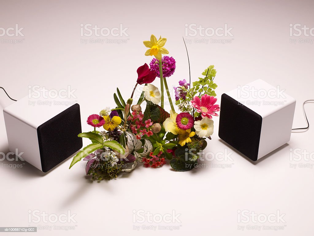 Speakers around flowers on white background, close-up royalty-free stock photo