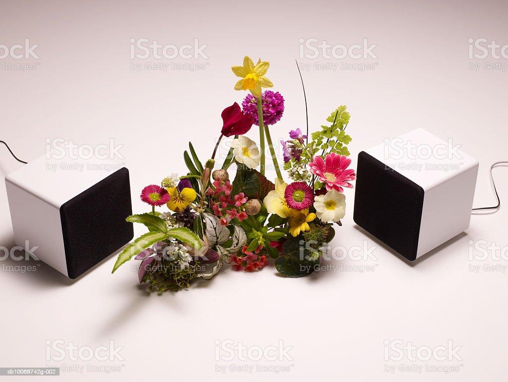 Ораторы вокруг цветы на белом фоне, крупным планом Стоковые фото Стоковая фотография