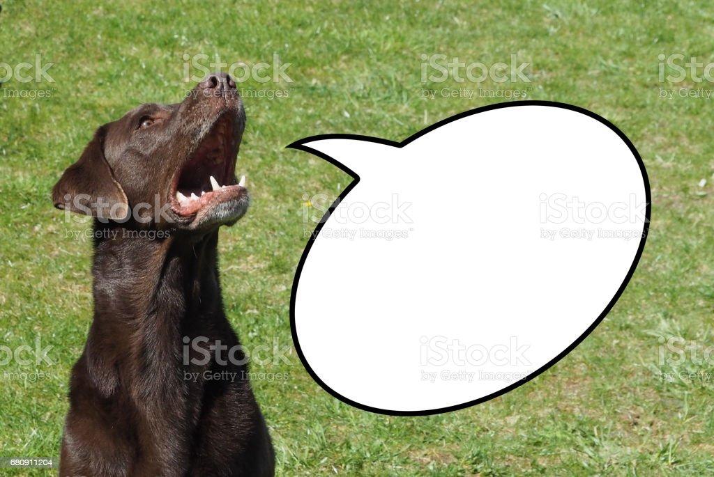 Speaking Dog, Labrador retriever royalty-free stock photo