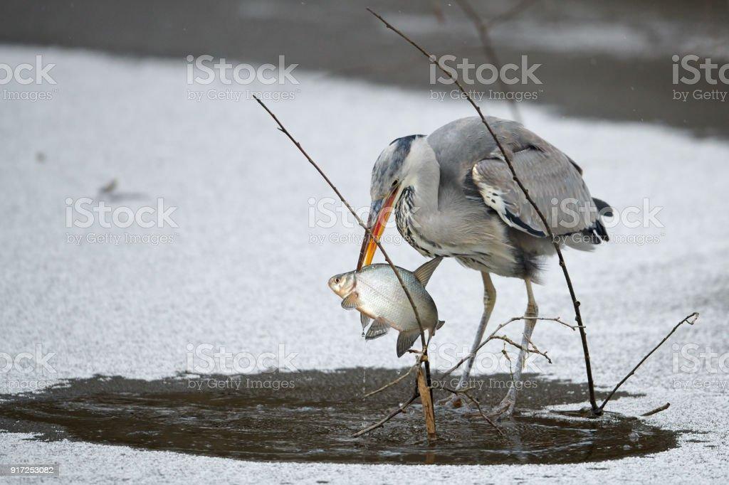 Spear fishing master stock photo