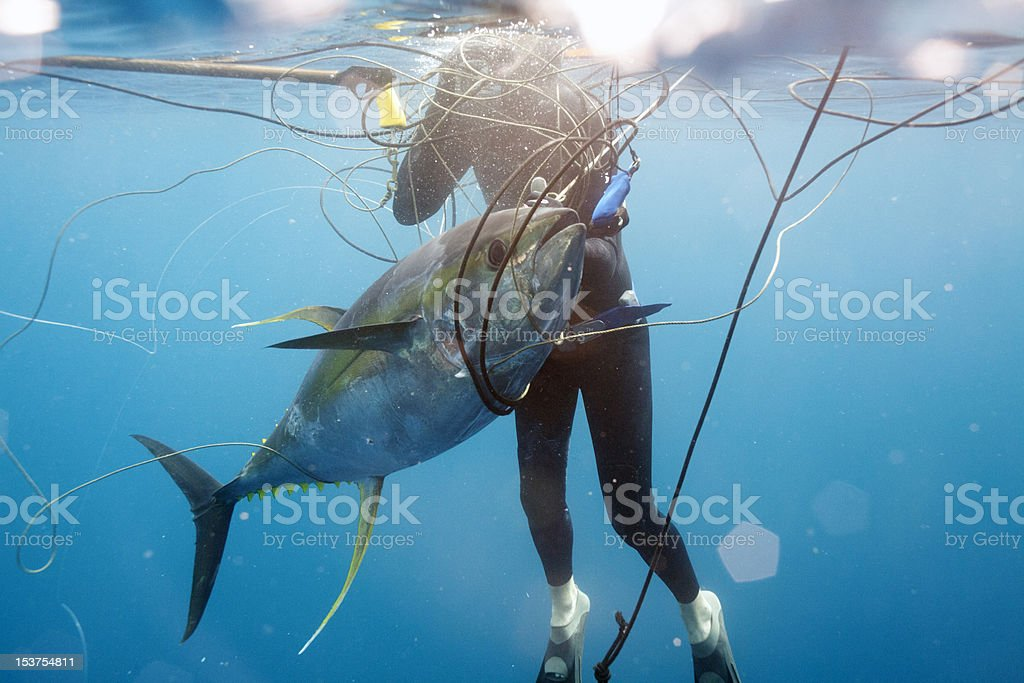 Spear Fishing - Royalty-free Animal Fin Stock Photo