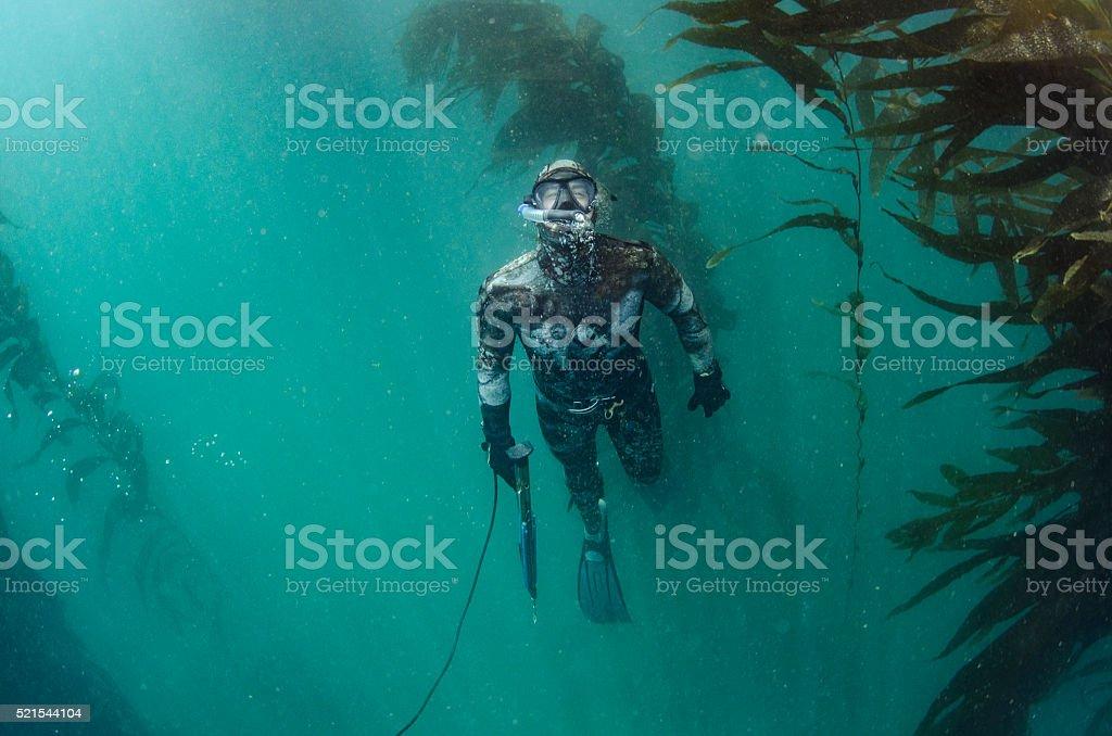 spear fishing stock photo