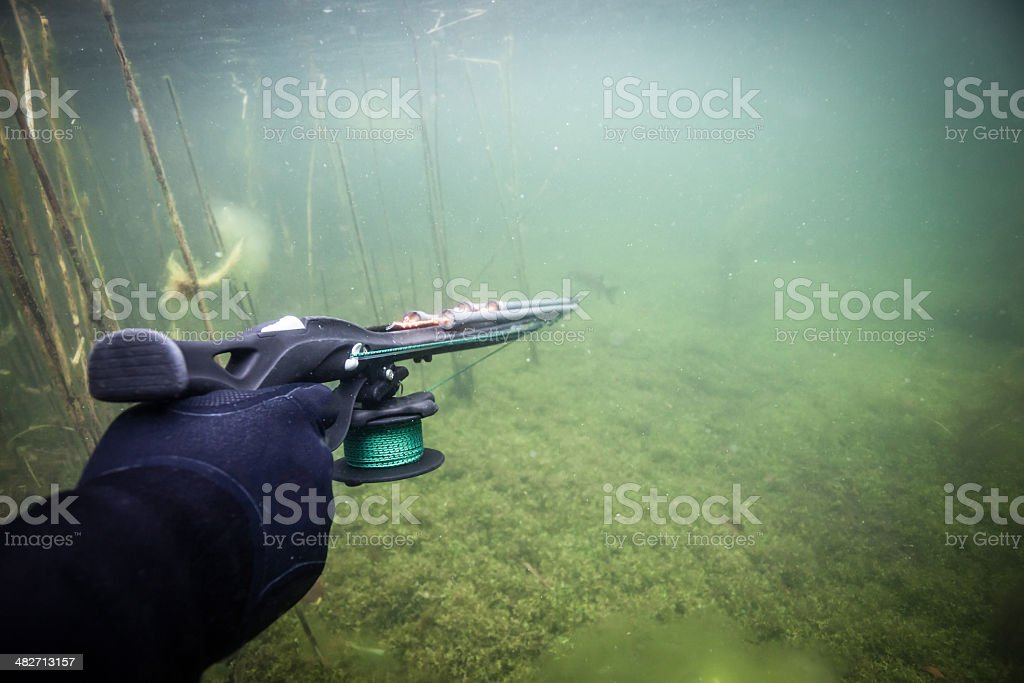 Spearfisher's hand holding speargun stock photo