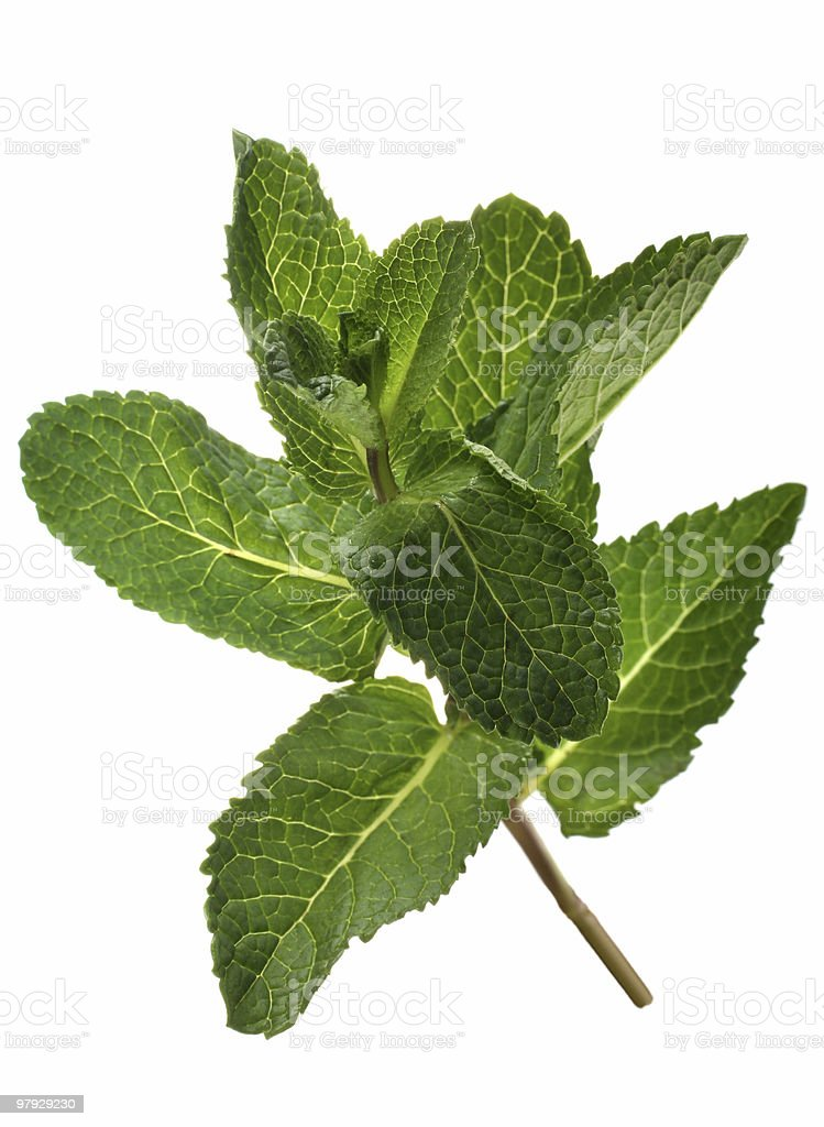 Spearmint bunch royalty-free stock photo