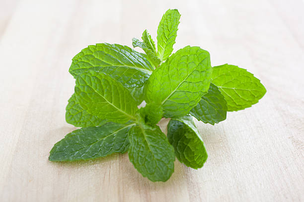 Spearmint Mint Herb stock photo
