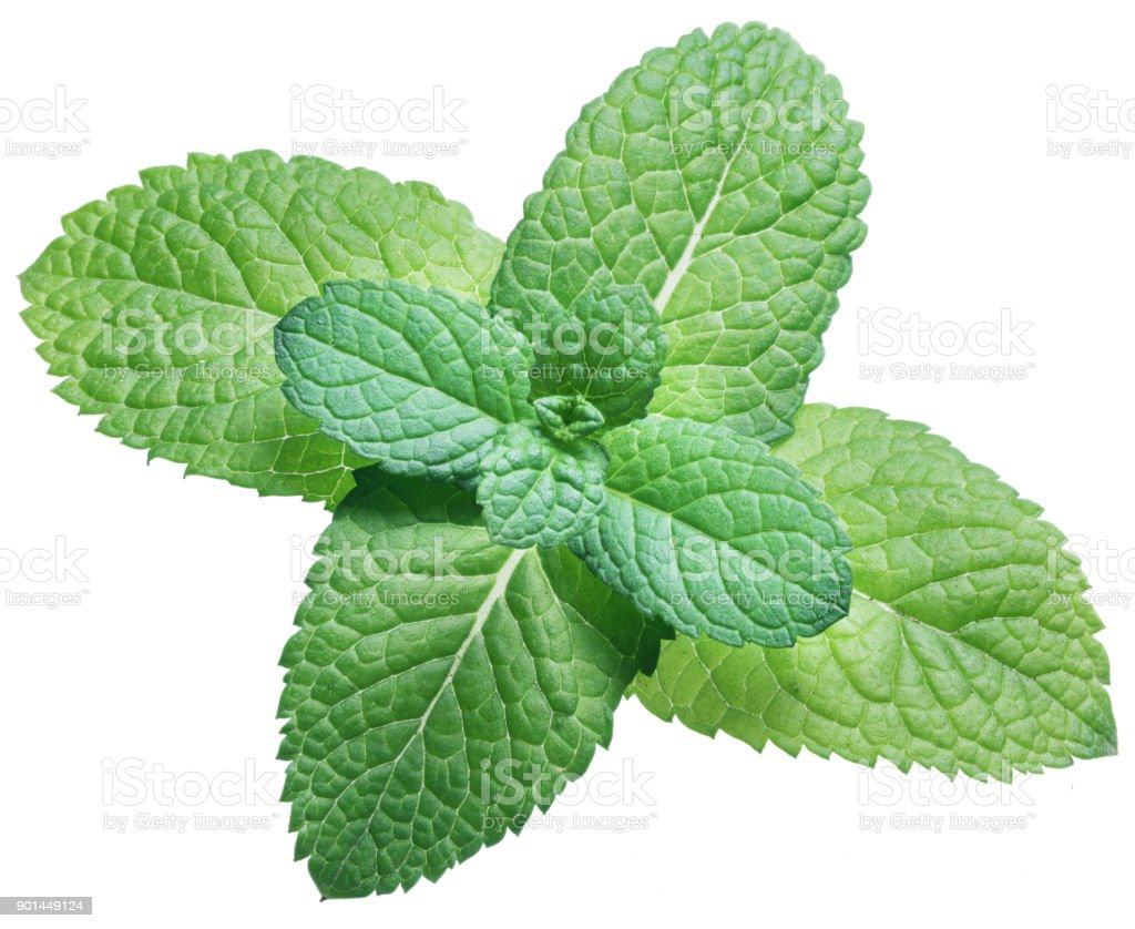Spearmint or mint on white background. Top view. stock photo