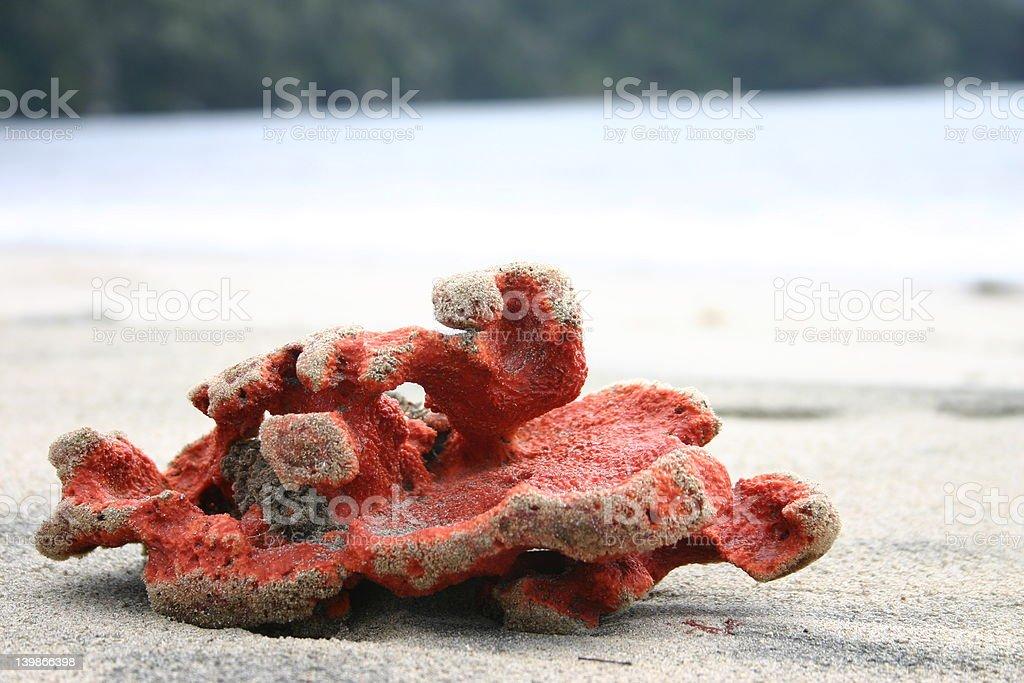 Specia Sea Shell stock photo