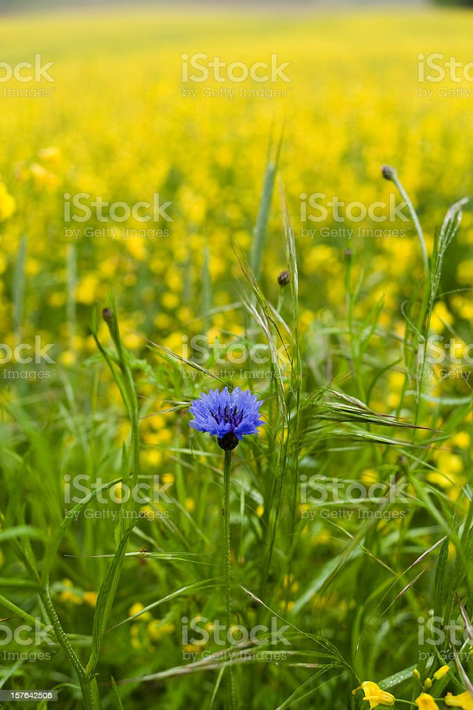 Special flower royalty-free stock photo