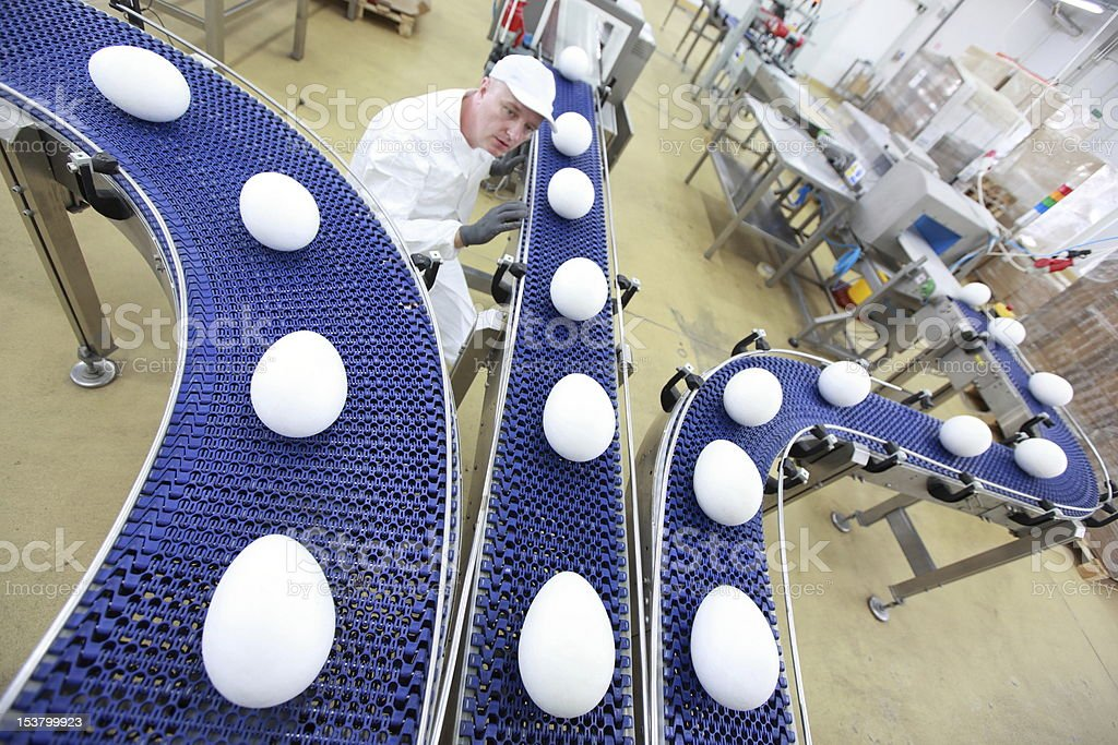 specialist at egg production line in gmo factory royalty-free stock photo