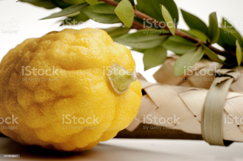 Species from the Jewish holiday of Sukkoth stock photo