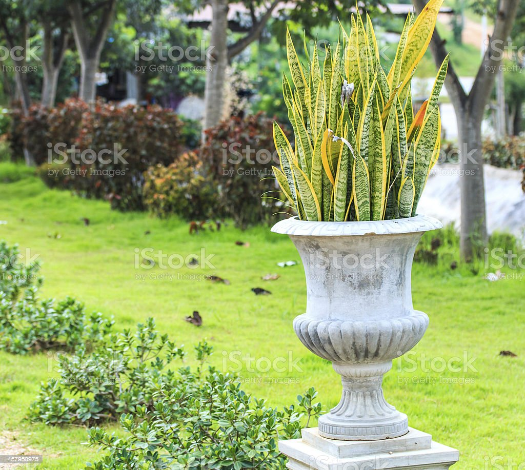 Piante Per Aiuole Perenni specie di piante perenni arbusti - fotografie stock e altre