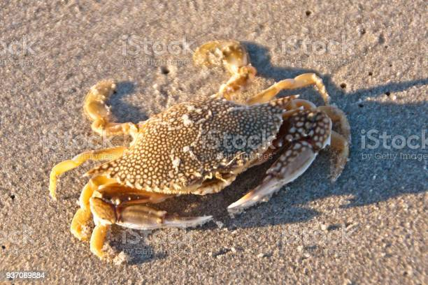 Speckled Swimming Cram Dead Stock Photo - Download Image Now