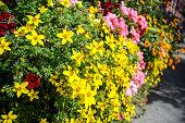 Spectacular Autumn flowering plants