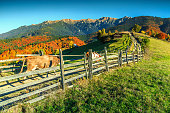Stunning colorful autumn alpine landscape with green fields and high mountains,Bran,Transylvania,Romania,Europe