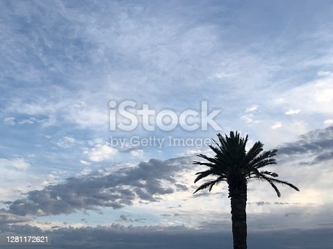 Palm tree in silhouette against beautiful fluffy clouds