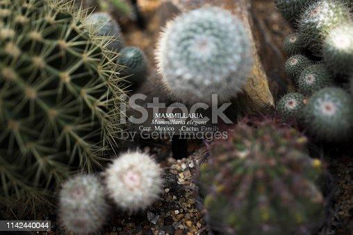 New Mexico, Arizona, Nevada, USA, Cactus
