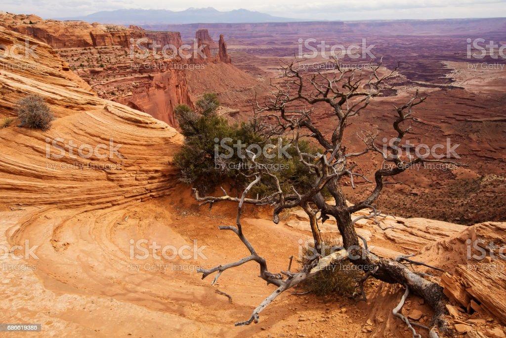 Paysages spectaculaires du Parc National de Canyonlands en Utah, USA photo libre de droits